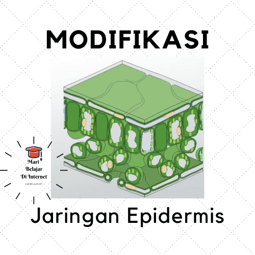 Modifikasi Jaringan Epidermis