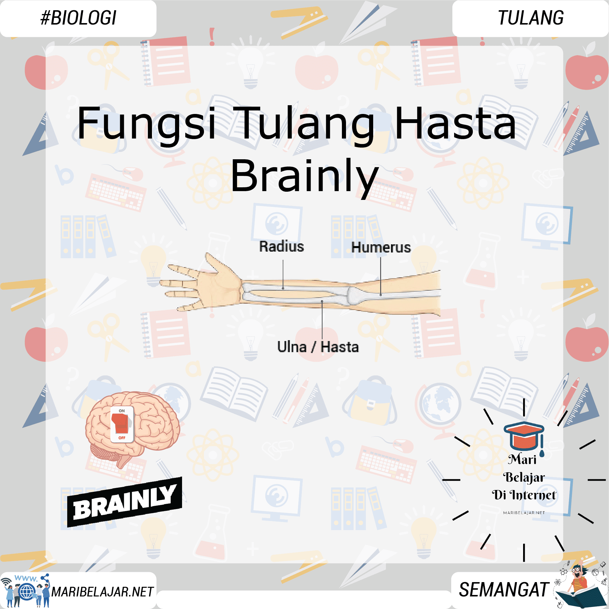 Fungsi Tulang Hasta Brainly